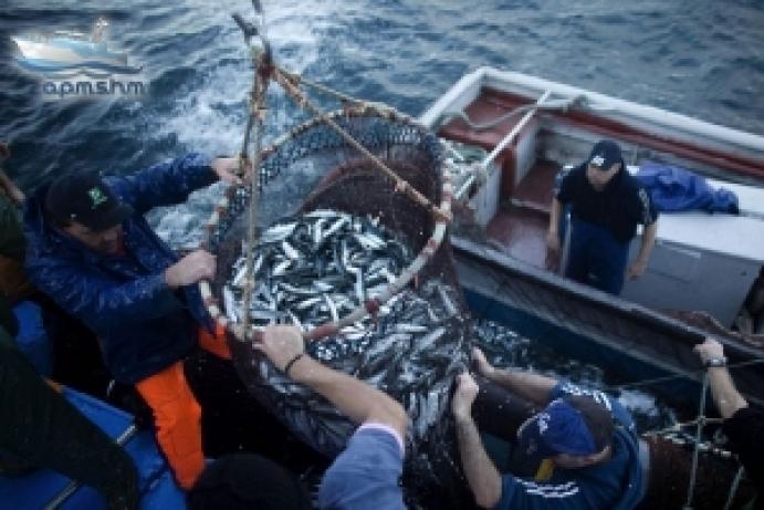 Decretada proibição da pesca da sardinha